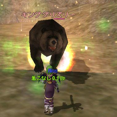 地上はクマがぁ
