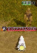 コレが油虫・・・(゚Д゚)?!