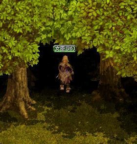 暗い森ですねー