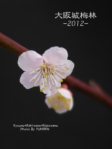 2012032607.jpg