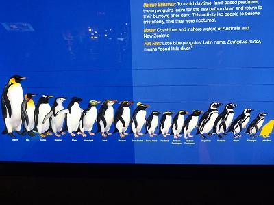 ブルーペンギン5