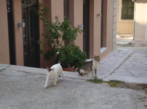 途中で出会った猫たち1