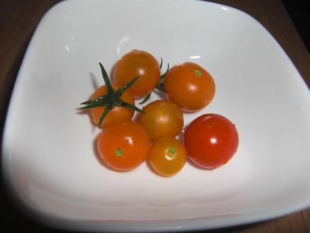 本日収穫のトマッティーたち