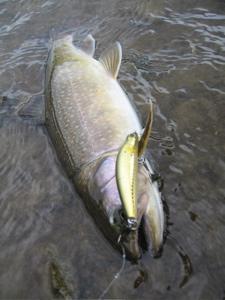 5:25岩魚1