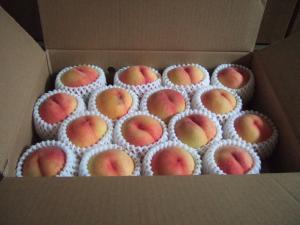 080902桃
