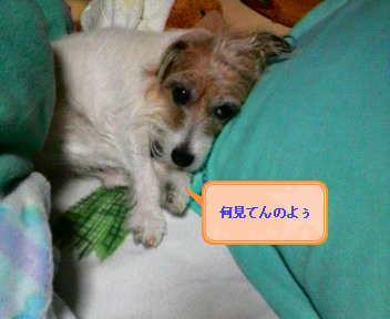image0001_20080119223949.jpg