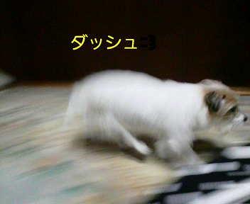image0001_20080119233523.jpg