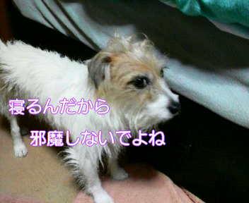 image0002_20080112184626.jpg