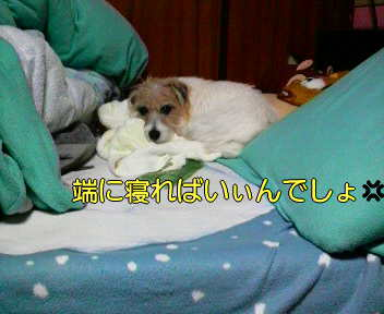 image0002_20080119233538.jpg