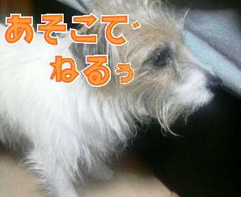 image0003_20080112184644.jpg