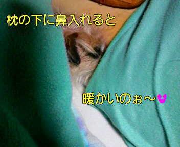 image0003_20080114163020.jpg
