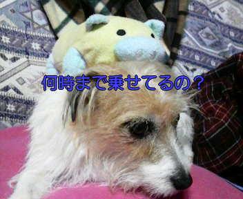 image0003_20080114170536.jpg