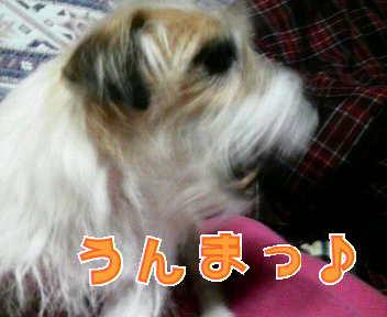 image0003_20080119224049.jpg