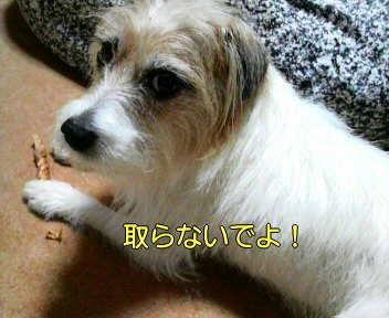 image0003_20080119231809.jpg