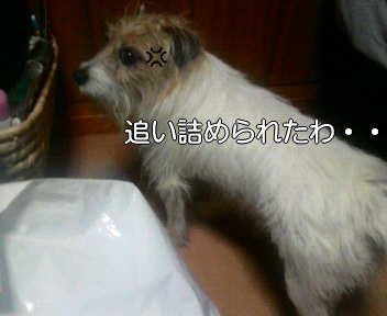 image0004_20080112184658.jpg