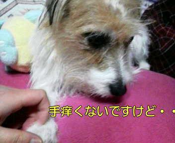 image0004_20080114170547.jpg