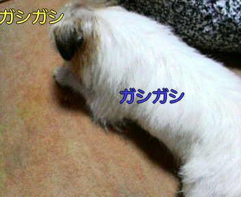 image0004_20080119231819.jpg