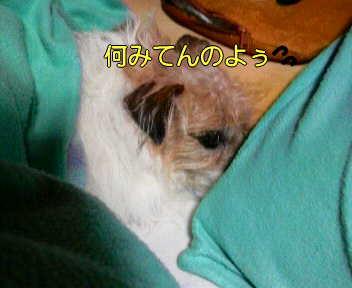 image0005_20080114163041.jpg