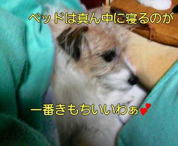 image0006_20080114163050.jpg