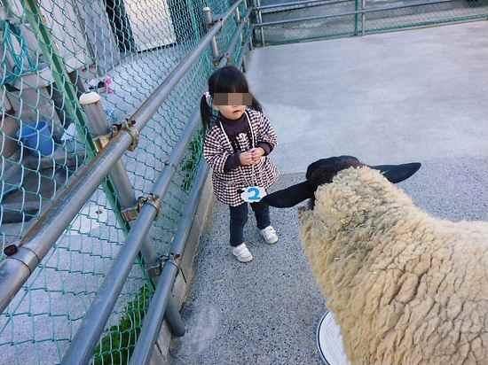 羊さん、こわい!
