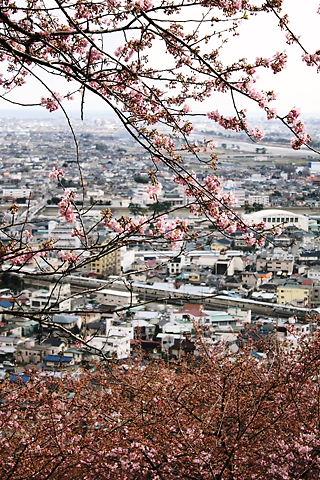 桜の木と町並み