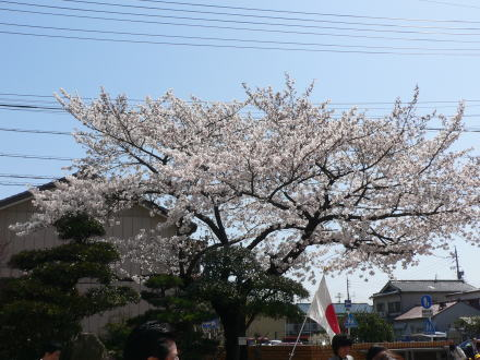 060406sakura.jpg