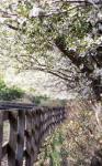 2003-4-27-5.jpg