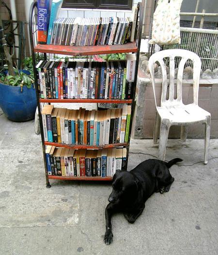 bookstore-dog.jpg