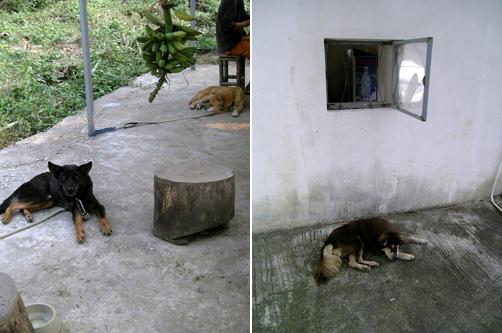 dogs-having-rest.jpg
