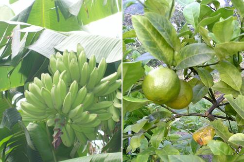 tropicalfruits.jpg