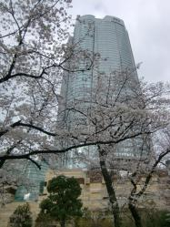 1003六本木桜02a