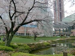 1003六本木桜2a