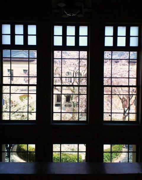 館内から見る桜
