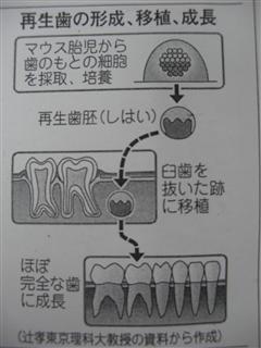 CIMG5295_R.jpg