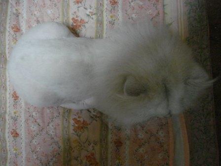 20081016 (5)