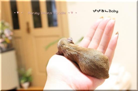 2011 ぴこたん1