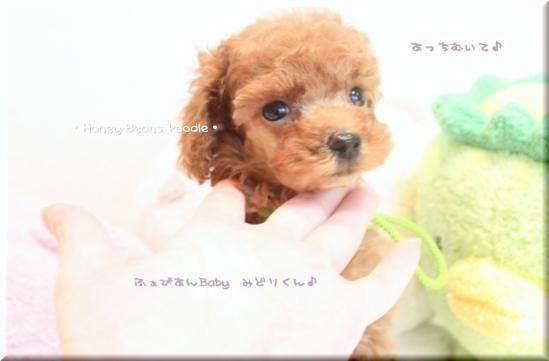 2011 10 3 ふぁびあんべぃびぃ8