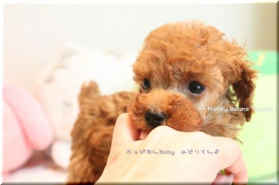 2011 10 3 ふぁびあんべぃびぃ6