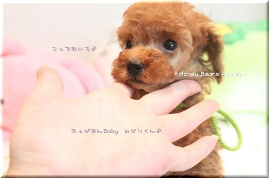 2011 10 3 ふぁびあんべぃびぃ7