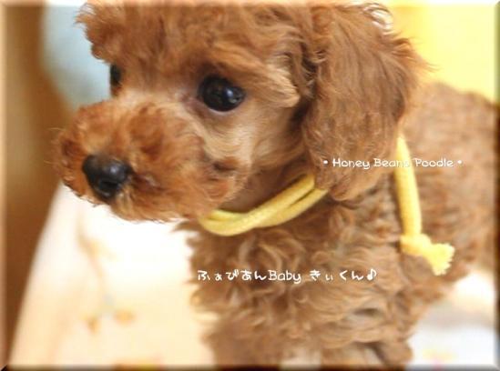 2011 10 3 ふぁびあんべぃびぃ15