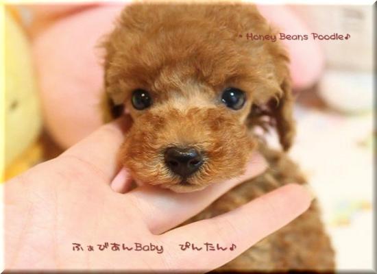 2011 10 3 ふぁびあんべぃびぃ10