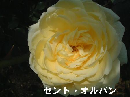 ブログ5215