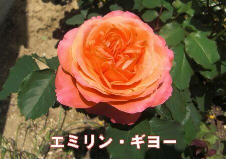 ブログ5214