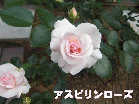 ブログ5216