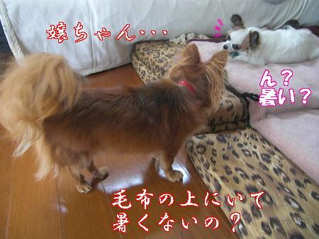 Aブログ07084