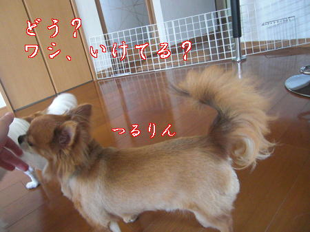 Aブログ07085