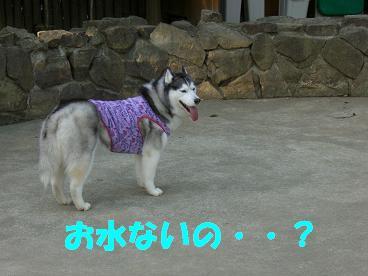 CIMG8383.jpg