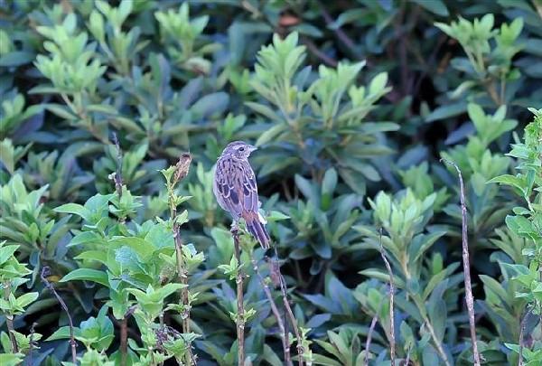 20080917-1 nakamura-0910-DSC_3839