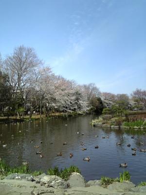 じゅんさい池4