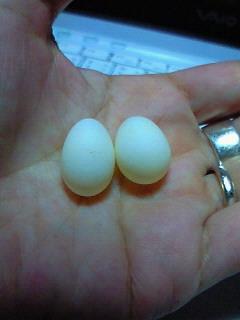 1/30 文ちゃんの卵